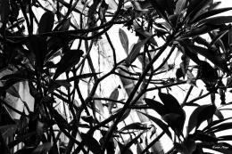 Noya Keren. Leaves ( 45x30 см / 2017 г. )