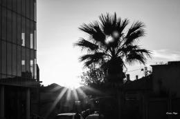 Noya Keren. Sunset ( 45x30 см / 2017 г. )