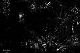 Noya Keren. Blades ( 45x30 см / 2016 г. )