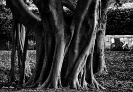 Noya Keren. Wooden hands ( 45x30 см / 2016 г. )